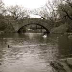 """Central Park Bridge"" by carloslopezdrums"