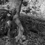 """""""Beech forest #2"""" by stacherski"""