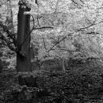 """""""Beech forest #3"""" by stacherski"""