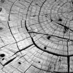 """Tree Rings"" by JSMarshallPhotography"