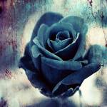 """""""Blue Rose of Oblivion"""" by perovict"""