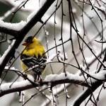 """late winters beauty"" by artbyts"