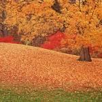"""Autumn"" by peacefuleye"