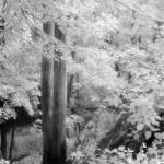 """Magic Forest"" by peacefuleye"