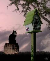 Cat and Bird House
