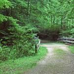 """Woods Panorama"" by peacefuleye"
