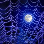 """Night Web"" by robophoto"