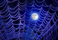 Night Web