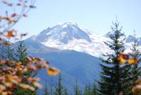 Mount Baker View between the trees