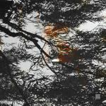"""NaturScape_Reflection_II"" by SuzanneSilkCollection"