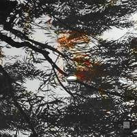 NaturScape_Reflection_II