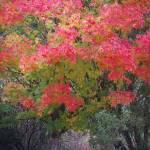 """Monet Tree Like Maple Leaf"" by Arlene010"