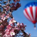 """""""Balloon Stampede, 2010"""" by webtwb"""