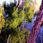"""NaturScape_Reflection_I"" by SuzanneSilkCollection"