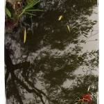 """NaturScape_MoonriseReflection"" by SuzanneSilkCollection"