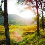 """""""Sunny landscape"""" by AlexandruVita"""