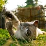 """""""Kitten playing"""" by AlexandruVita"""