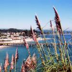 """Capitola Through Bottle Brush"" by SusanKessler"