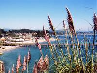 Capitola Through Bottle Brush