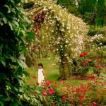 """Fairydust harvesting"" by Dwiggs"
