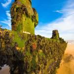"""Green Seaweed Blue Sky"" by michaelbond"