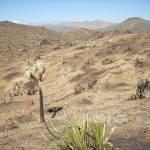 """""""Burnt Desert"""" by HighDesertSky"""