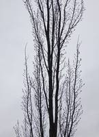 leafless tree in winter in silhouette