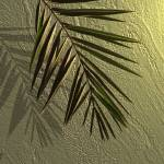 """Stucco and Palm"" by spadecaller"