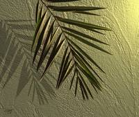 Stucco and Palm