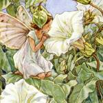 """The Bindweed Fairy"" by DevereauxGallery"