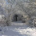 """""""woodland walk"""" by artbyts"""