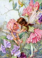 The Sweet Pea Fairy