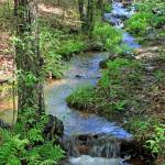 """Fern Creek"" by Lorraine_Sommer"