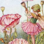"""The Poppy Fairy"" by DevereauxGallery"