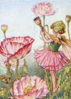 The Poppy Fairy