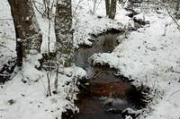 Fern Creek Winter