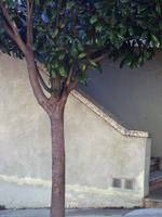 Tree and Wall, San Francisco