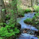 """Fern Creek Spring"" by Lorraine_Sommer"