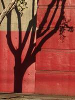 Tree Shadow, San Francisco