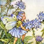 """The Chicory Fairy"" by DevereauxGallery"