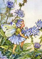 The Chicory Fairy