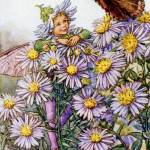 """The Michaelmas Daisy Fairy"" by DevereauxGallery"