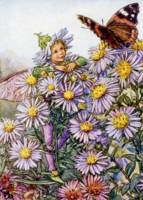 The Michaelmas Daisy Fairy
