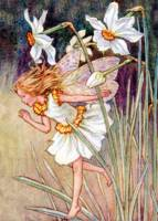 The Narcissus Fairy