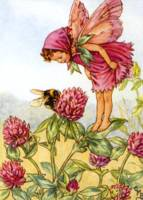 The Red Clover Fairy