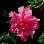 """Tropical Flower"" by Corbett"