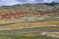 Painted Hills Fore & Wide
