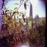 """""""Rural Grave"""" by movingstillpix"""