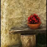 """Compo / Flowerpot"" by JuanjoL"