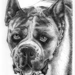 """Boxer Dog Breed"" by crazyabouthercats"